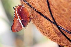 наклоненное ржавое страницы бабочки Стоковое Изображение RF
