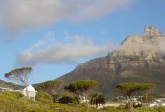 Наклоненные деревья и гора в Кейптауне Южной Африке Стоковое фото RF