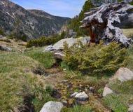 Наклоны весны долины Madriu-Perafita-Claror стоковые изображения rf