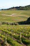 Наклоны виноградника Chianti Стоковые Фотографии RF