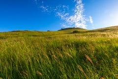 Наклон холма покрытого с травой Стоковое Изображение