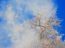 Налет инея на предпосылке неба Стоковые Фотографии RF