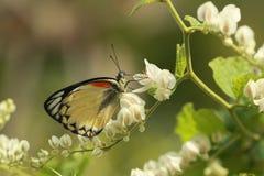 наместник бабочки отдыхая стоковые фото