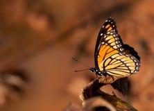 наместник бабочки цветастый Стоковые Изображения RF