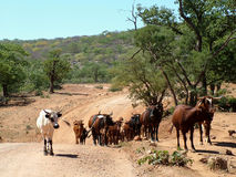 Намибия сельская Стоковые Фото