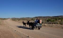 Намибия: Тележка осла часто единственный переход для большой части из  стоковое фото