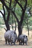 Намибия стоковое фото rf