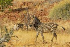 Намибия - Palmwag - Damaraland Стоковое Изображение RF