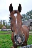 Намордник лошади Стоковое фото RF