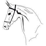 намордник лошади Стоковые Фотографии RF