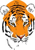 Намордник тигра стоковое фото