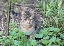 намордник s кота Стоковое Фото