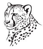 Намордник гепарда Стоковые Изображения