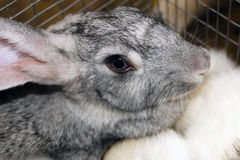 Намордник кролика Стоковые Фото
