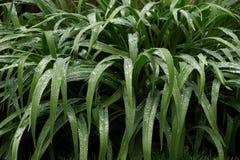 намоченный сад Стоковые Фотографии RF