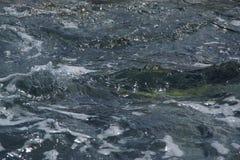 Намочите, †океана «юг Португалии Стоковые Изображения RF