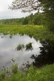 Намочите в болоте на белом мемориале, Litchfield, Коннектикуте стоковое фото