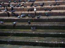 Намочите лестницы на береге реки с группой в составе голуби Стоковая Фотография RF