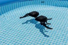 Намочите женские бюстгальтер или бюстгальтер купальника плавая в воду бассейна Стоковое Изображение