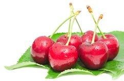 Намочите зрелые плодоовощи ягоды вишни с капельками воды Стоковая Фотография