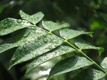 Намочите листья в утре Стоковое Изображение RF
