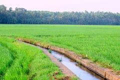 Намочите канал пропуская через поле риса в Индии стоковая фотография