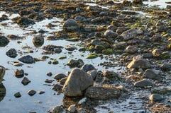 Намочите край с камнями, морской водорослью и мхом стоковое фото rf