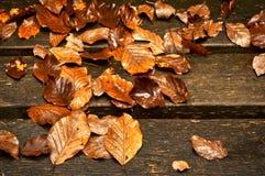Намочите листья на деревянных планках в осени стоковые фотографии rf