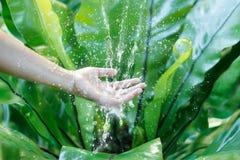 Намочите лить в руке женщины на природе, вопросе окружающей среды стоковые изображения
