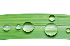 Намочите падения на зеленых изолированных листьях Стоковое Фото