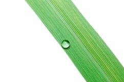 Намочите падения на зеленых изолированных листьях Стоковые Фотографии RF