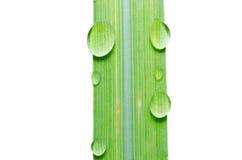 Намочите падения на зеленых изолированных листьях Стоковые Фото