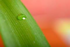 Намочите падения на свежих зеленых лист, изолированных на белизне Стоковые Изображения RF