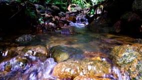 Намочите подачу на реку ther в лесе сток-видео