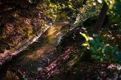 Намочите подачу потока в лесе осени с атмосферическим autu стоковая фотография