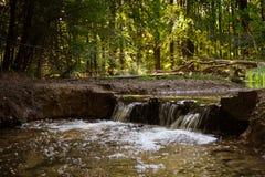 Намочите поток в лесе с малым водопадом, мертвыми ветвями дерева стоковые фотографии rf