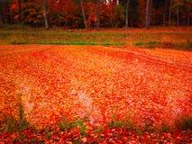 Намочите с полным листьев в после полудня осени Стоковые Фотографии RF