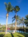 Намочите характеристики на поле для гольфа на веснах пустыни Jw Marriott стоковые фотографии rf