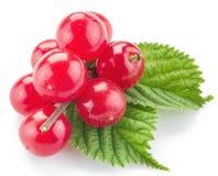 Нанкин или пушистые ftuits вишни с листьями на белизне Стоковые Фотографии RF