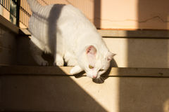 Нападение кота Стоковая Фотография