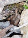 Нападения змейки стоковые фотографии rf