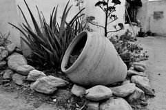 Напечатайте сад пустыни снаружи Стоковые Изображения RF