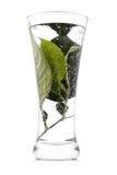 напиток свежий Стоковая Фотография RF