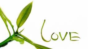 Напишите влюбленность слова с валентинкой влюбленности листьев манго Стоковые Изображения