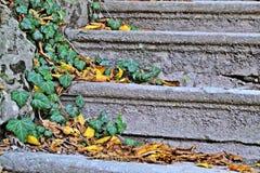напольные лестницы Стоковая Фотография RF