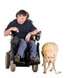 направляющий выступ собаки Стоковая Фотография