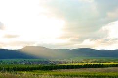 Направьте лозы des в Эльзасе - Франции, французской стране Стоковое Изображение RF
