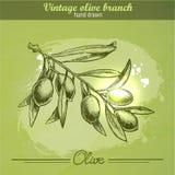 нарисованная ветвью оливка руки Иллюстрация вектора