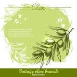 нарисованная ветвью оливка руки Бесплатная Иллюстрация