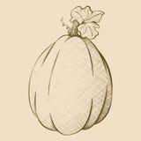 Нарисованная вручную винтажная тыква Oblonged стиля Стоковые Фото